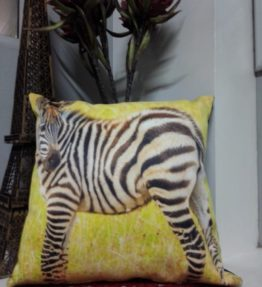 Baby Zebra Scatter Cushion