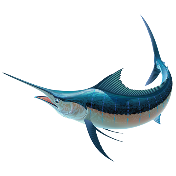 Marlin Transparent